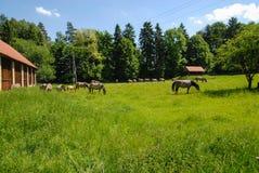 Landskap av Polen Arkivbild