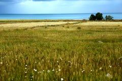 Landskap av Qinghai sjön Fotografering för Bildbyråer