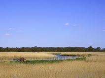 Landskap av reedbeden på floden Alde - Snape - Suffolk Royaltyfria Bilder