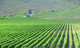 Landskap av rutt 62 med vinfält - Sydafrika Arkivbilder