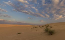 Landskap av sanddyn och gräs med moln på solnedgången arkivbilder