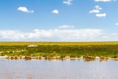 Landskap av savann Lejon av Serengeti, Afrika Arkivfoton
