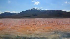 Landskap av sjön Laguna Colorada, Bolivia lager videofilmer