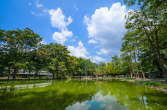 Landskap av sjön och träd Arkivfoto