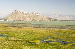 Landskap av sjön Skadar, Montenegro Royaltyfri Bild