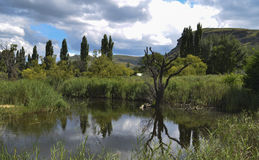 Landskap av sjunkna träd nära Clearens Royaltyfri Fotografi
