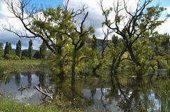 Landskap av sjunkna träd nära Clearens Arkivbild