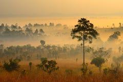 Landskap av skogen i morgonen Arkivfoto
