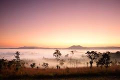 Landskap av skogen i morgonen Royaltyfri Foto