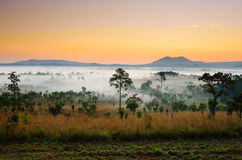 Landskap av skogen i morgonen Arkivfoton