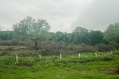 Landskap av skogsavverkning av en naturlig skog, kontrast av liv och död av flora och faunor arkivfoton