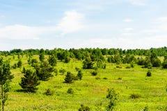 Landskap av små träd i äng Arkivbilder