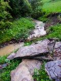 Landskap av sommarliten vik av en bergflod royaltyfri foto