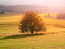 Landskap av Sumava med det ensamma trädet i mitt av ängen, Tjeckien royaltyfri foto