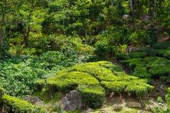 Landskap av teakolonierna i djungeln, Indien Royaltyfri Bild