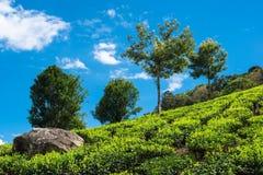 Landskap av teakolonierna Kerala Fotografering för Bildbyråer