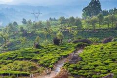 Landskap av teakolonierna Royaltyfria Bilder