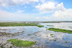 Landskap av Thale Noi Waterbird Park royaltyfri fotografi