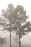 Landskap av träd i dimman på en Phurua, loei, Thailand Arkivfoton