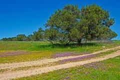 Landskap av träd och lilavildblommor royaltyfri foto