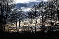 Landskap av träd vid solnedgången royaltyfri illustrationer