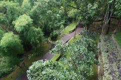Landskap av trägångbanan Arkivfoto