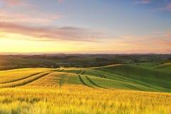 Landskap av Tuscany på solnedgången royaltyfri bild