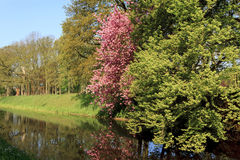 Landskap av Utrecht, Netherland Royaltyfri Bild