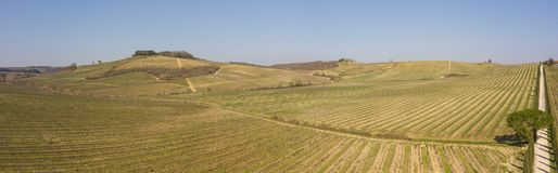 Landskap av vingårdarna av Tuscany i Italien under vårtid Vinrutten royaltyfria bilder