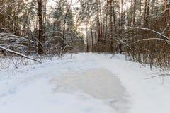 Landskap av vinterpinjeskogen som täckas med frost på solig weat Arkivfoto