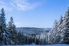 Landskap av vinterskogen Royaltyfri Fotografi