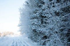 Landskap av vinterträ arkivfoto