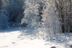 Landskap av vinterträ arkivbilder
