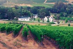 Landskap bilden av en vingård, Stellenbosch, Sydafrika. Royaltyfria Foton