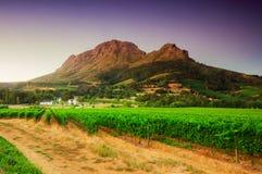 Landskap bilden av en vingård, Stellenbosch, Sydafrika. royaltyfri bild