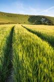 Landskap bilden av forntida krita som snider i lång man för backe om Royaltyfri Fotografi