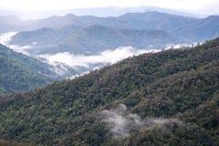 Landskap bilden av grönskarainforestkullar i dimmig dag med blå himmel royaltyfri bild