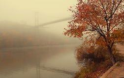 Landskap Bron och trädet med röda blad i morgonen mis arkivfoto