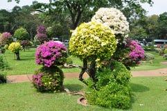 Landskap designen. Bougainvillea. Royaltyfri Bild