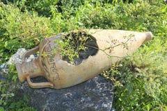 Landskap designen i trädgården med amfora och blommor dekorativa element Fotografering för Bildbyråer