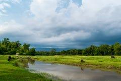 Landskap & en tyst flod: Affärsföretag Arkivbilder