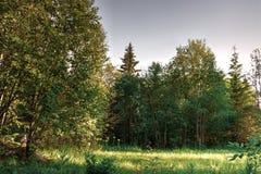 Landskap för äng för solnedgång för träd för säsongnaturskog Royaltyfri Foto