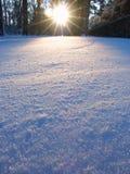 Landskap för aftonskogsolljus Royaltyfria Bilder