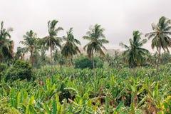 Landskap för banankoloni Arkivfoto