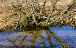 Landskap för blå flod för vår härligt lantligt bygd, arkivfoto