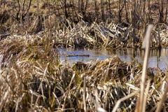 Landskap för blå flod för vår härligt lantligt bygd, arkivfoton