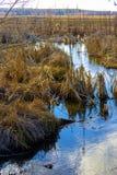 Landskap för blå flod för vår härligt lantligt bygd, royaltyfri bild