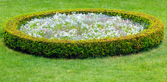 Landskap för blomma Arkivbild