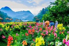 landskap för blommaträdgård royaltyfria bilder