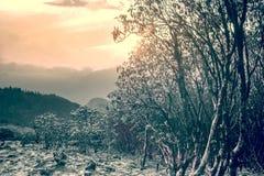 Landskap för dimmigt berg för vår med rhododendroner Arkivbild